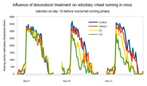 Influence of doxorubicin treatment